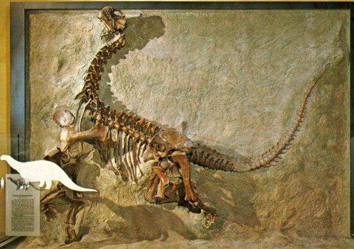 Camarasaurus-juvenile-skeleton