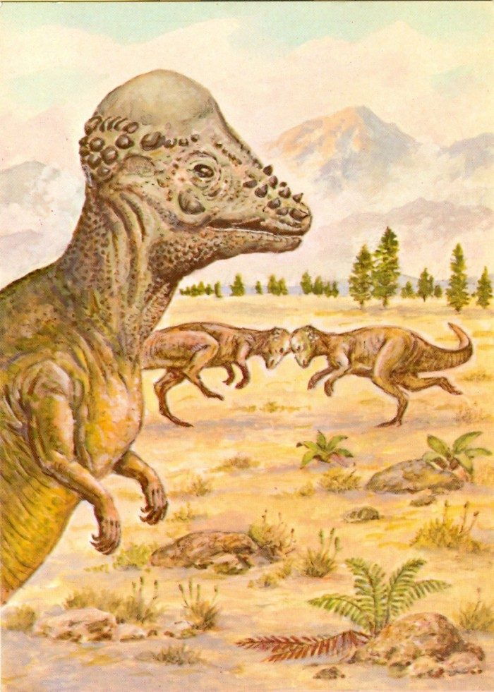 Pachycephalosaurus-postcard