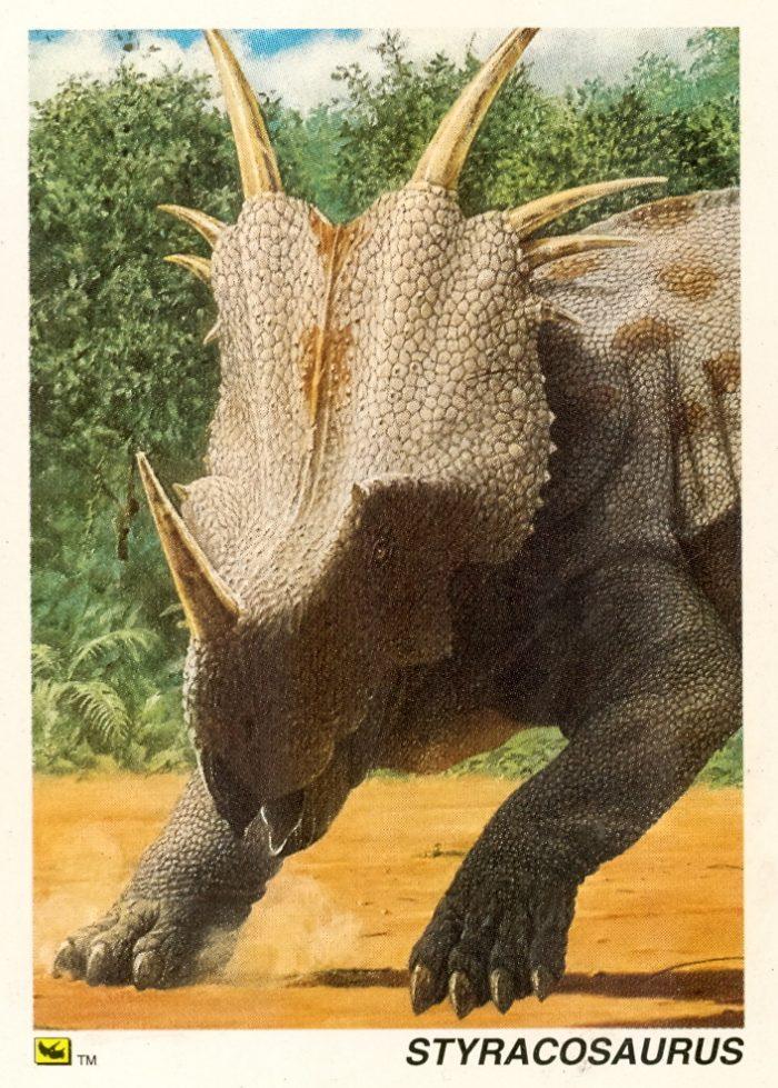 Styracosaurus card