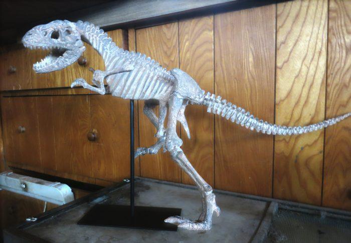 Tyrannosaurus skeleton sculpture