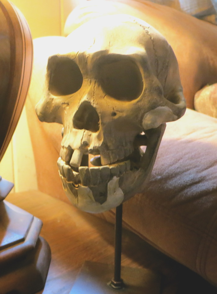 Lucy skull cast