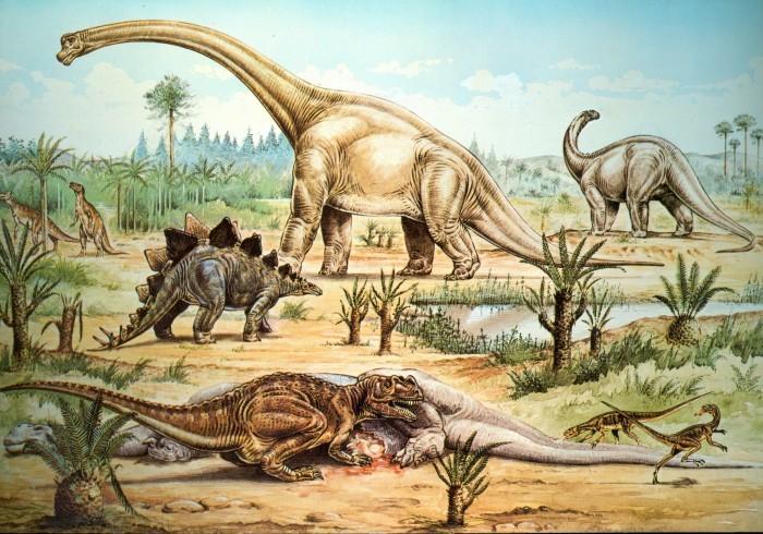 Natural History Museum postcard