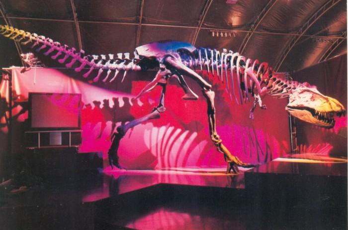 Tyrannosaurus-skeleton postcard